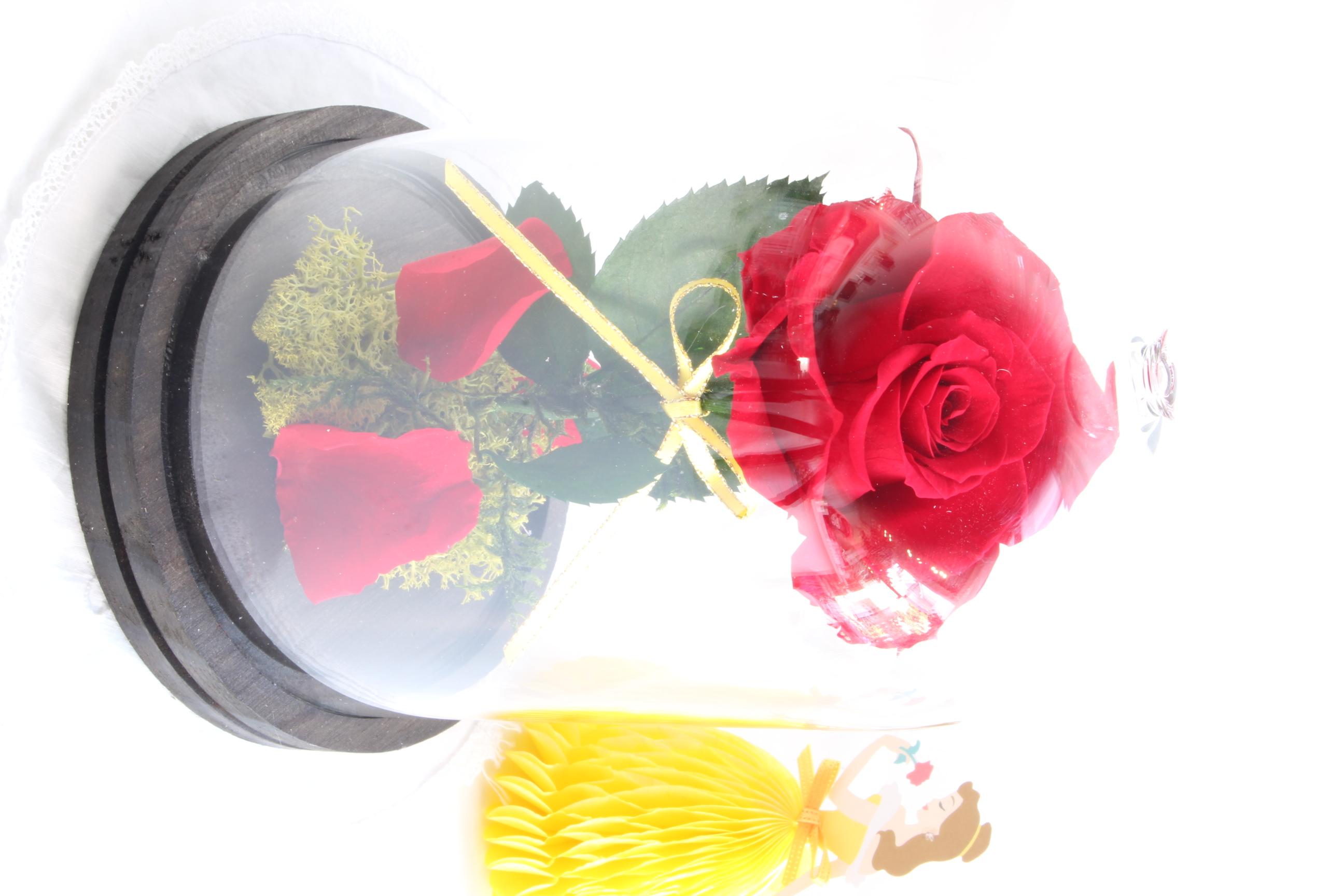 美女と野獣の赤薔薇アレンジメント