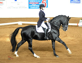 Are your breeding horses eligible for Rhineland Auto-Approval?
