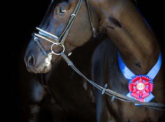 Inaugural Stallion Sport Test - A Great Success!