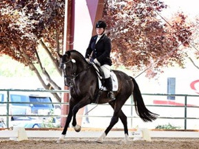 Stallions announced for the 2017 No. American Stallion Sport Test