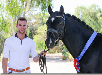 Dressage Tests for Pony Stallions now posted!