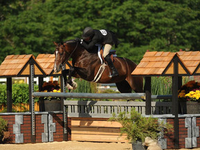New Approved Stallion for ARS/AHS: Vallado