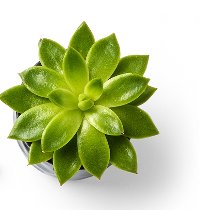 Succulent%20Plant%20and%20Binder%20Clips