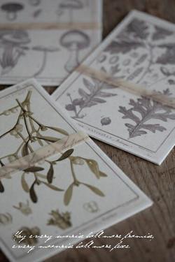 植物画POSTカード