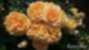 Cinnamon_Chai_2087-004.jpg