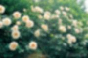 Rokoko_0322-002.jpg