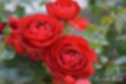 Scarlet_Bonica_2046-004.jpg