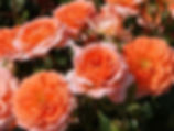 Vive_les_Vacances_0985-020_edited.jpg