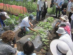 家庭菜園教室