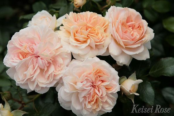 Garden_of_Roses_0111-002.jpg