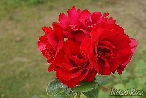 Crimson_Sky_0987-008.jpg