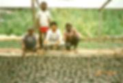 パプアニューギニア野菜の生産