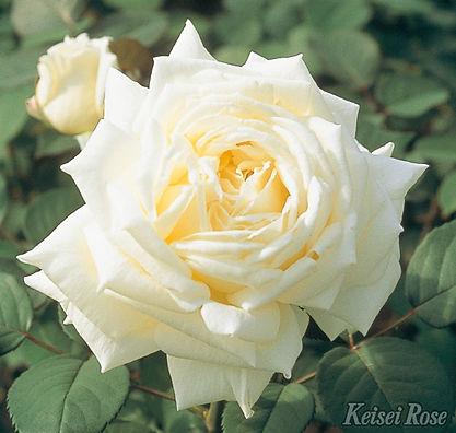 Royal_Princess_0611-002.jpg