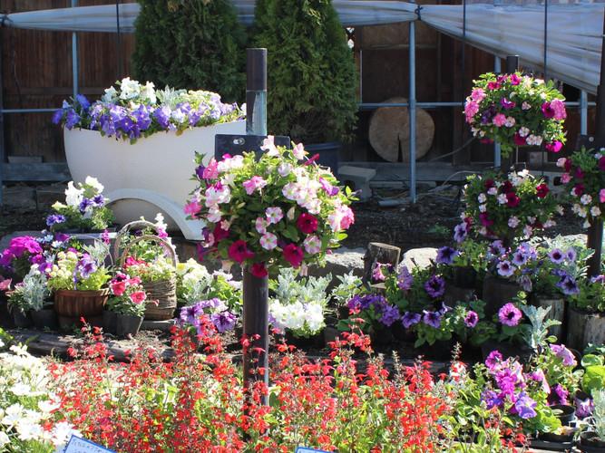 ハンギングバスケットのある花壇