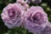 Novalis_0973-002.jpg