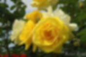 Izunoodoriko_0638-004.jpg