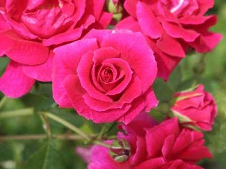 Lovestruck_2053-012_edited.jpg