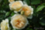Marie_Antoinette_0178-002.jpg