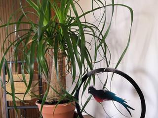 Déco en métal, les oiseaux au jardin QUETZAL CERCLE