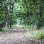 WE Jeûne sur Fontainebleau