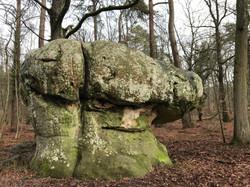 Jeûne ballage forêt Fontainebleau