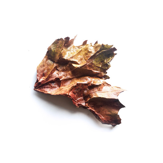 Leaves, paper clay, sponge, silicone