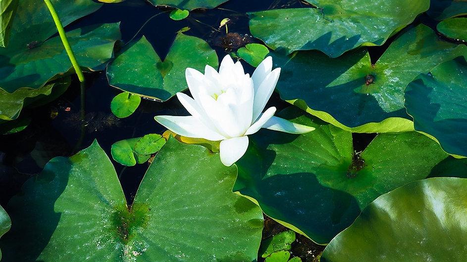 Association-So-Relax_Yoga-Méditation-sophrologie_Malakoff-Paris_visio-salle_lotus