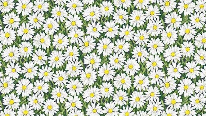 Summer Garden - White Daises (per m)