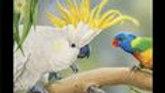 Wildlife Art Collection (per panel)