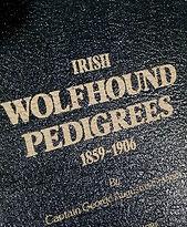 irish wolfhound puppies, irishwolfhound breeders