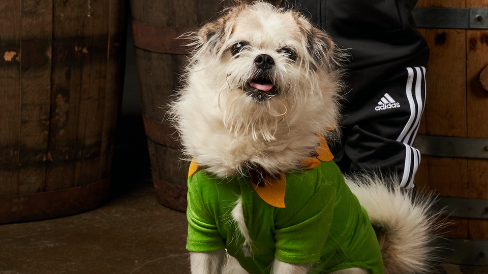 This picture of our co-founder's dog, Waffles, dressed as a sunflower for Halloween, keeps our 2-column gallery full.