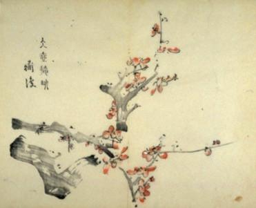 """""""Sakura"""" en japonés es símbolo de cambios y un nuevo comienzo... Dicen que la flor del cerezo es la mejor porque nunca se marchita; en un instante efímero, el viento la deshoja..."""