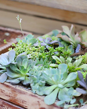 Pflanzenbox