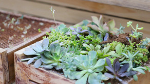 Garden Boxes! DIY Wood Box #series