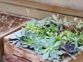 03 consejos prácticos para regar mi jardín durante verano