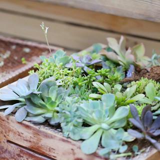 Plant Box