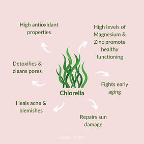 Chlorella.png