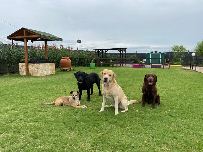 l'AltraVia_  i nostri cani