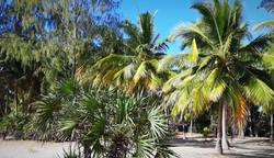 Mzimbati beach