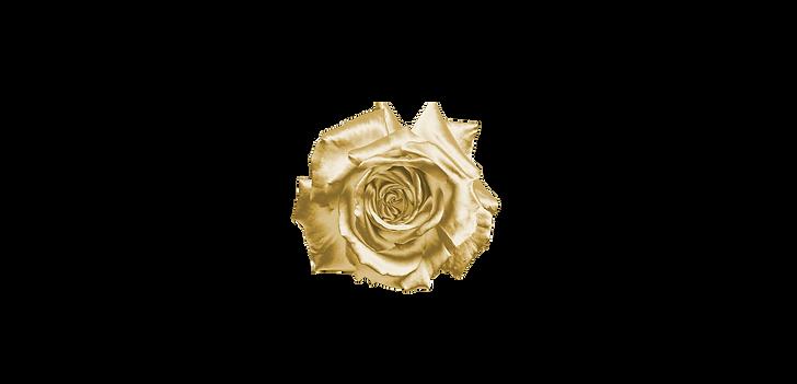 Afeme Perfumes - New arrivals website pr
