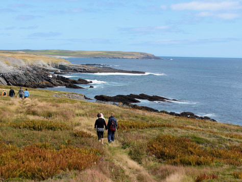 5 Reasons You Need To Visit Mistaken Point UNESCO World Heritage Site