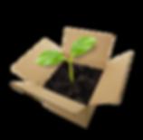 keimling_inthebox_kl_6grad_kl.png