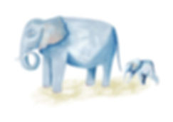 Familia_Elefantes.jpg