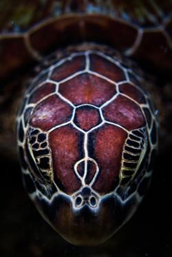 Turtle headshot