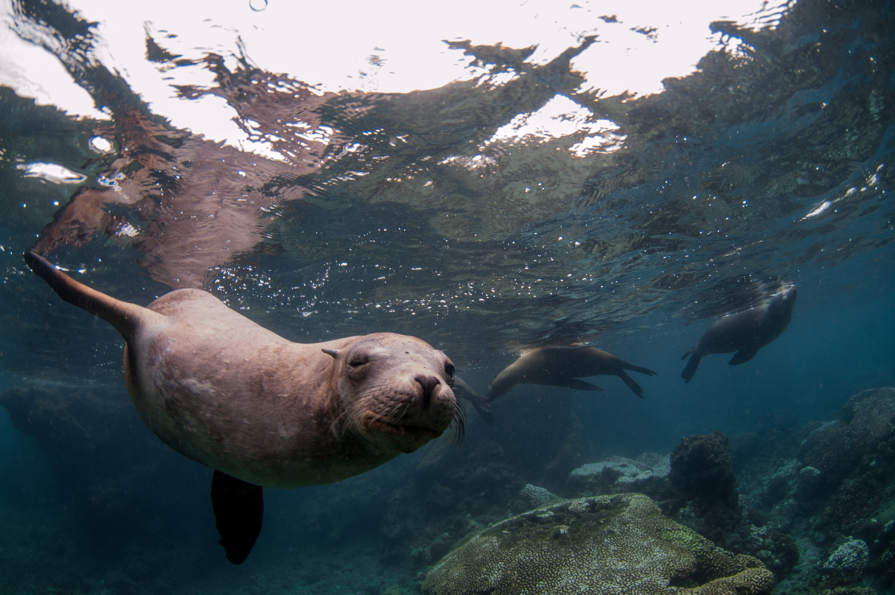 Inquisitive sea lion