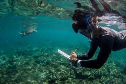 Surveying turtles at Apo Island