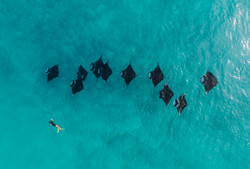 Manta chain from above