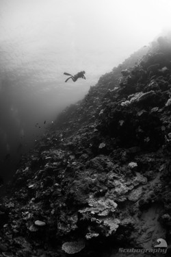 Black and white reef wall