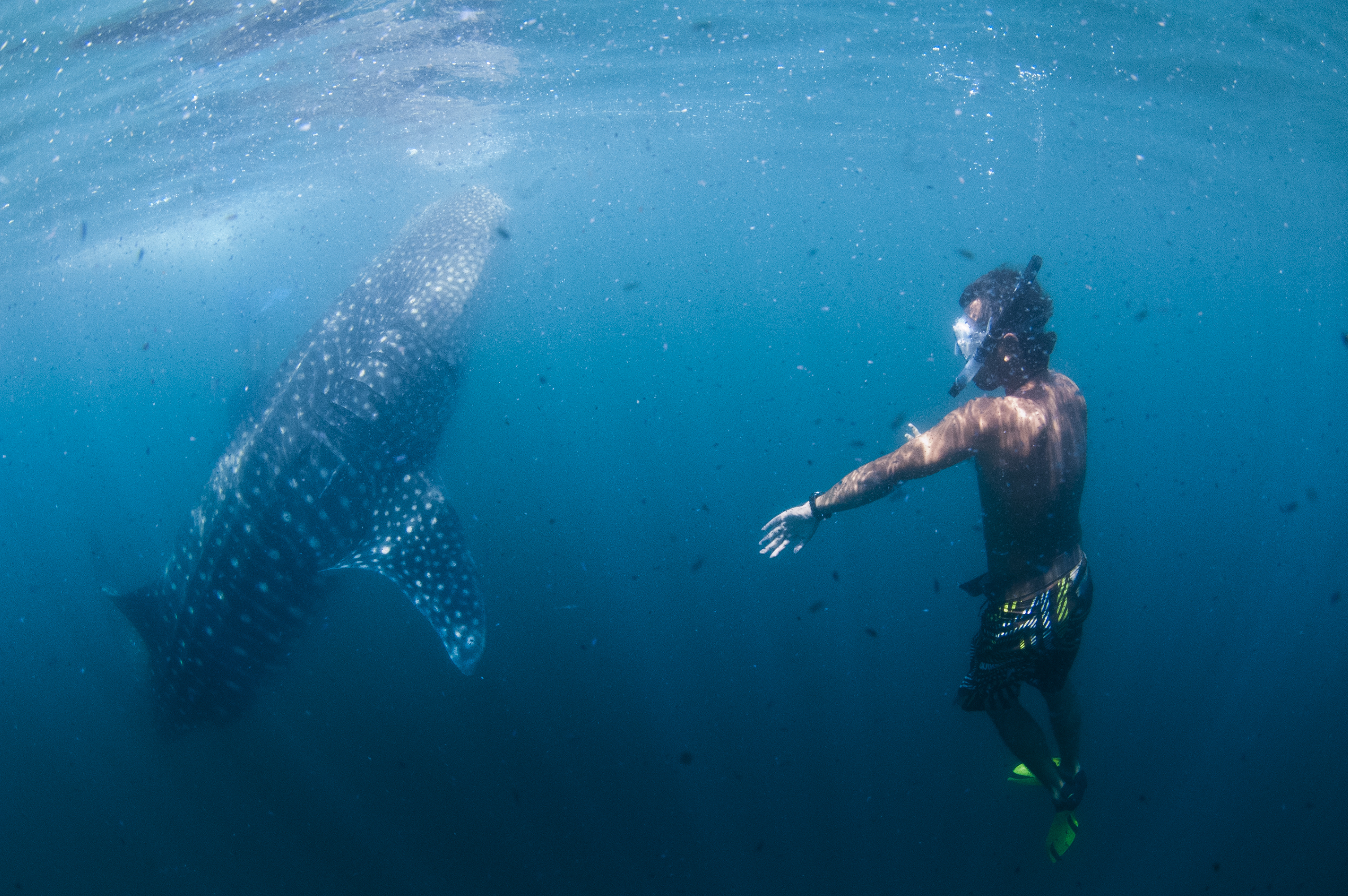 Swimming with ocean giants