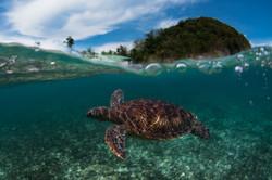 Turtle split shot